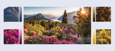 Izjemno podrobne slike gorskih cvetlic s tehnologijo XR HDR Remaster