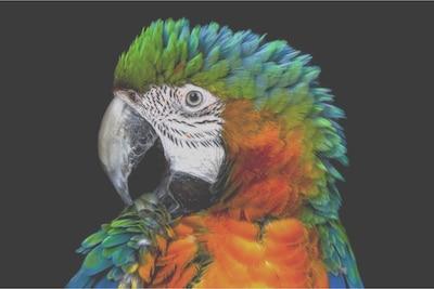Podrobnost papige na zaslonu LCD Edge