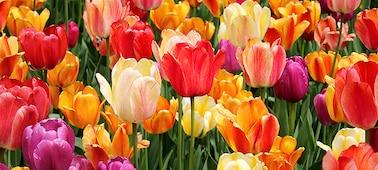 Podrobnost cvetlic s prikazom finih senc in odtenkov na cvetnih listih